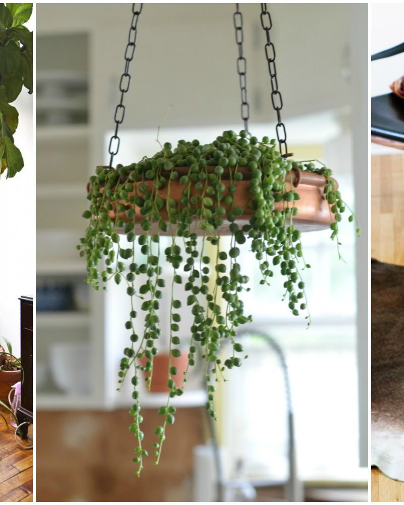 Great Ideas That Brings The Garden Indoors